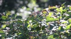 Mediterranean vegetation Stock Footage