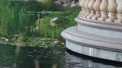 Ducks swim in the beautiful lake Stock Footage