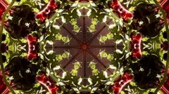 Abstract texture poppy flowers kaleidoskop pattern Stock Footage