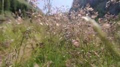 Walking through the fields POV Stock Footage