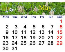 Calendar for May 2016 with blossoming chestnut Stock Illustration