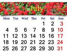 calendar for July 2016 with image of salvia - stock photo