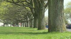 Elm Trees Lining Clarence Esplanade Southsea  Common in Hampshire Stock Footage