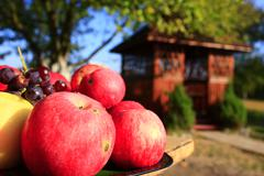 red apples on the arbor background - stock photo