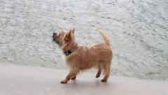 Dog at the Quay Near the Water Sniffing Stock Footage