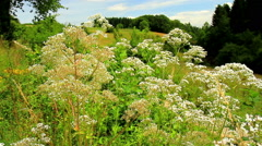 Meadow on the Belgian countryside Stock Footage