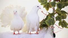 Pair Of White Birds Stock Footage