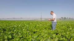 Stock Video Footage of Agronomist inspects soybean field. Irrigation waters.