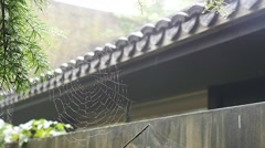 Cobweb in front of Chinese ancient building in the rainy day Stock Footage