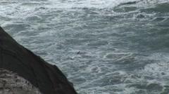 Gannet Flying in New Zealand Stock Footage