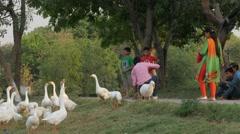 Lady feeding goose in Shakti Sthal pak,New Delhi,India Stock Footage