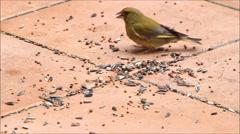 Birds, wild birds, pecking grains Birdseed - stock footage
