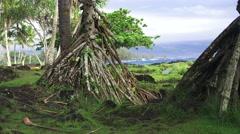 Hawaiian Flora and Ocean on Big Island Stock Footage