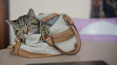 Kitty sleeping inside stylish carrying case Stock Footage