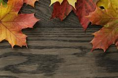 autumn leaves directly from above - stock photo
