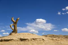 Tree trunk and desert in Gansu province, China Stock Photos