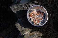 Marinaded fish with onion Stock Photos