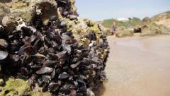 Pan on a bed of mussels with tourists on the background Stock Footage