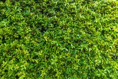 Stock Photo of Green leaf background
