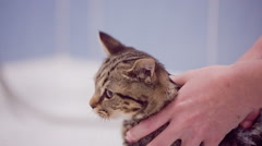 Washing cat head under shower close up Stock Footage