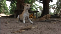 Dog in the bush Africa Stock Footage