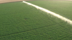 Aerial view of an agricultural sprinkler in a watermelon field Stock Footage