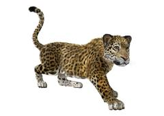 Big Cat Jaguar - stock illustration
