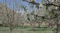 Apple orchard,Tabo,Spiti,India Stock Footage