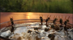 Honey vessel and wasps Stock Footage