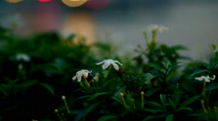 flower with blur light and river background a scene from romantic dinning - stock footage
