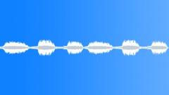 Black-tailed Gnatcatcher Sound Effect