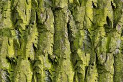 Bark of tree. Seamless Tileable Texture Stock Photos