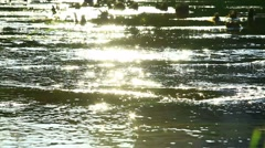 Flecks of sunlight sparkle in fast moving water current Stock Footage