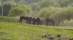 Small herd of horses feeding Stock Footage