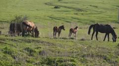 Small herd of horses feeding Stock Footage