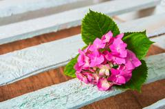 Fresh pink  hydrangea flower Stock Photos