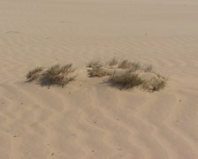 Primary dune + blowing wind in drifting sand area Stock Footage