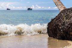 Sea waves on the beach with palm tree inclined - stock photo