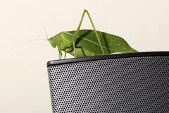 Green Leaf Katydid - stock photo