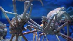 Stock Video Footage of King Crab at aquarium ocean dark blue bottom fighting with each other