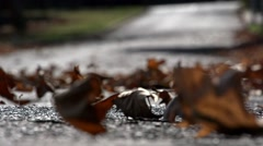 Stock Video Footage of Autumn leaves blow down the road