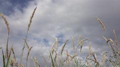 Beachgrass against sky Stock Footage