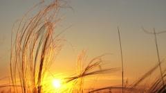 Sunshine At Sunset Stock Footage