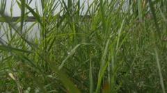 Plants Near a Lake Stock Footage