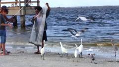 Feeding Fish to Seabirds, Sanibel Island, Florida Stock Footage