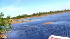Fast, exciting airboat ride in the Everglades, Florida Stock Footage