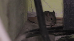 Mouse in the house Stock Footage