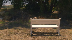 White bench placed in rural area Stock Footage