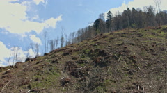 Forest with felling of cutted trees in Carpathian mountains in Ukraine Stock Footage