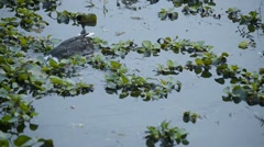 The Ducks swimming in the Lake. Stock Footage